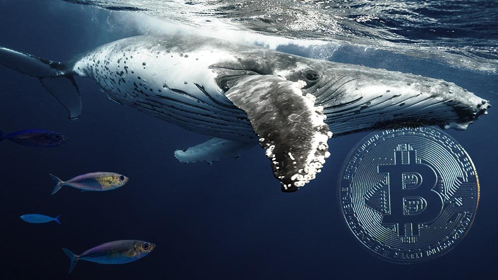 Dòng tiền của cá voi đang ảnh hưởng đến giá Bitcoin