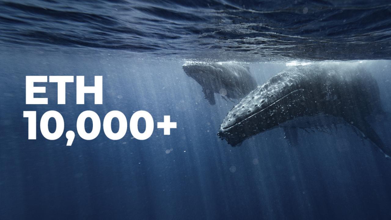 Số lượng cá voi Ethereum nhảy vọt khi số lượt tìm kiếm ETH đạt mức cao mới mọi thời đại